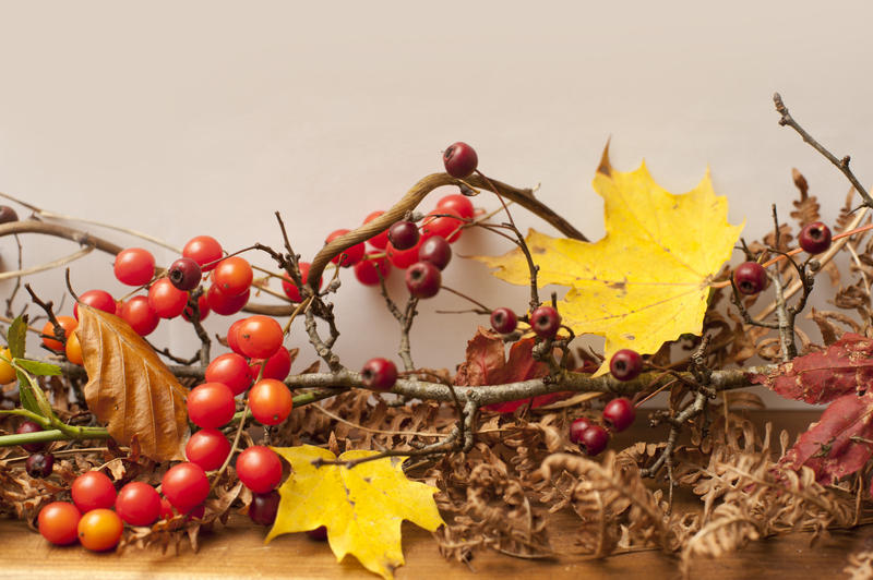 fall berries and fruits twigs and leaves forming a seasonal decorative border
