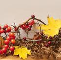 9986   autumn in nature