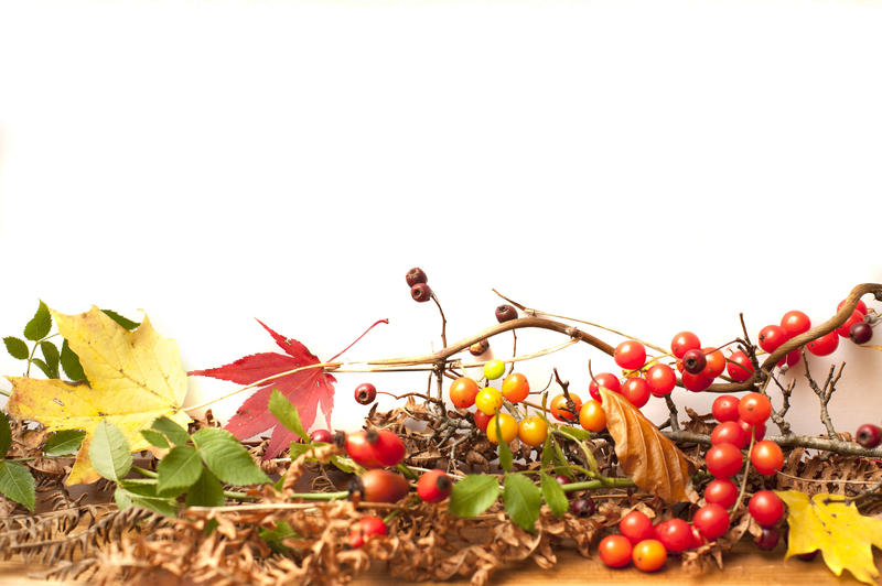 a background with space for text and a border of autumn leaves and berries forming a seasonal shelf runner