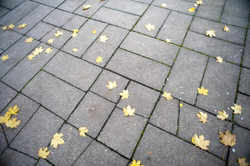Brick pavement or sidewalk with scattered colorful yellow autumn or fall leaves on the surface of the grey bricks