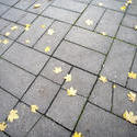 10906   Brick pavement with yellow autumn leaves