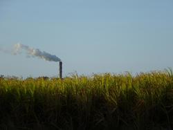 10786   Green Fields with Smoking Industrial Chimney Afar
