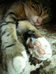 11490   cats paw