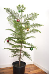 8653   simply decorated tree