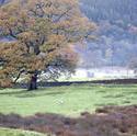 9972   Misty country landscape