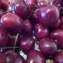 8704   dark red healthy cherries