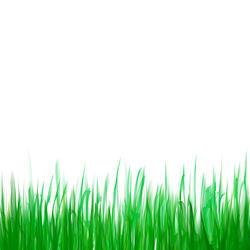 9441   digital grass