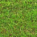 9442   digital grass002