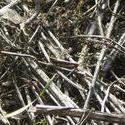 8152   dry grass and grasshopper