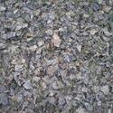 8239   dry leaves of a  poplar