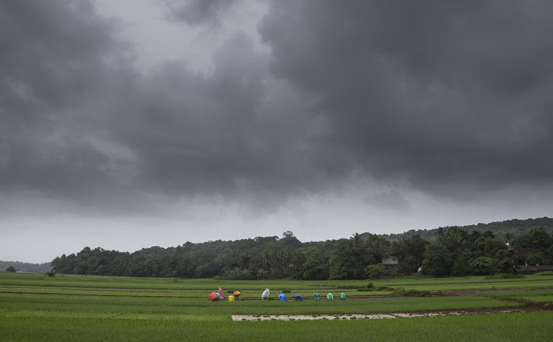<p>Farmers working during a monsoon day</p>