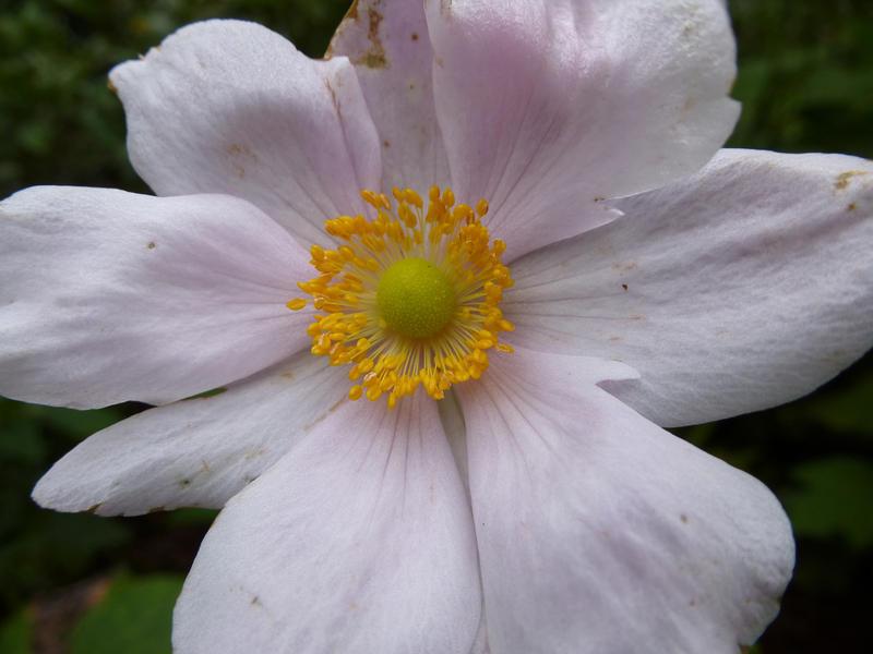 Image Result For Yellow Garden Flowers Uk