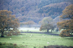 9978   Beautiful pastoral English landscape