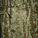 8567   green tree trunk