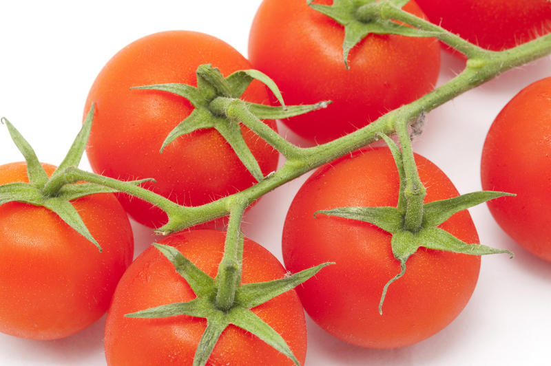 10613   Newly Harvested Healthy Red Tomatoes on a Stem