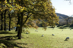9979   Scenic landscape in the English Lake District