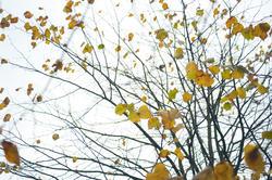 10960   Late autumn tree