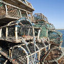 7837   Crab or lobster pots