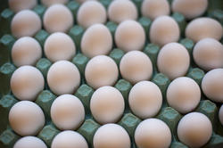 8500   White chicken eggs, in a carton cardboard