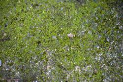 10961   moss background