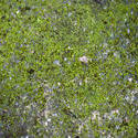 10961   moss background