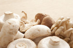 11791   Selection of fresh edible mushrooms