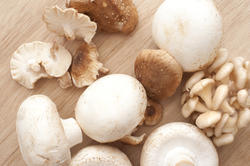 11792   Different white mushrooms