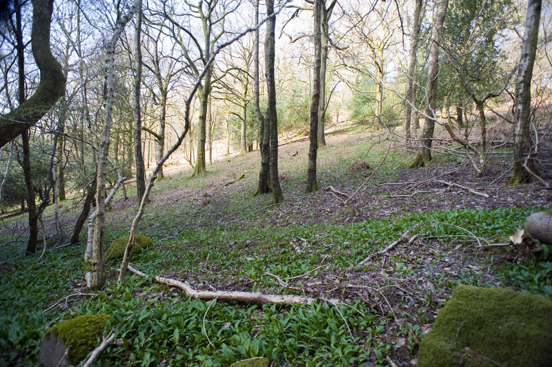 Open woodland on a hillside with bare leafless deciduous trees and fallen dead branches on a sunny winter day
