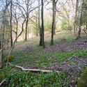 8723   Open woodland on a hillside
