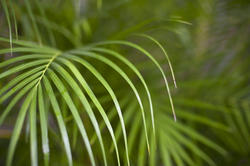 10964   tropical palm