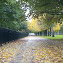10965   Park Walkway with Fallen Leaves and Side Rails