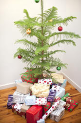 8666   Pile of presents under the Christmas tree