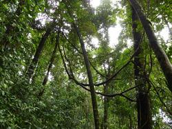 10967   Rainforest