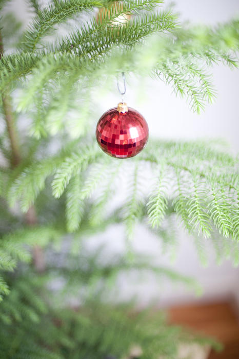 Single red bauble hanging on the branch of a real evergreen pine Christmas tree with shallow dof and copyspace for your seasonal greeting or message