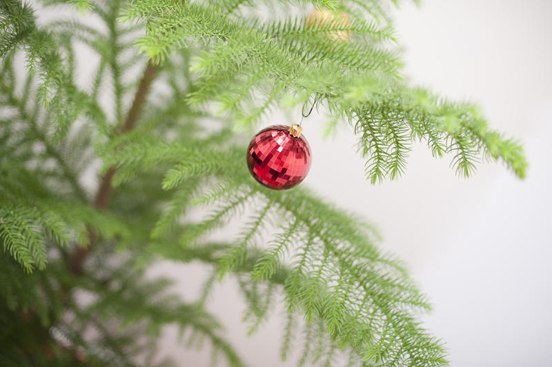 Red decorative shiny bauble hanging on the branch of a green Christmas pine tree
