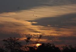 11041   rising sun