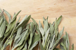 8467   Fresh leaves of sage