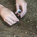 9847   Man planting seeds in a spring garden
