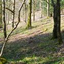 8724   Woodland trees on a hillside slope