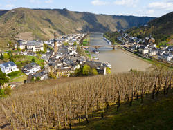8261   Steep Slopes of the Mosel