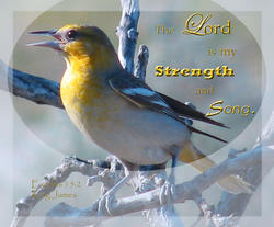 11199   Strength and Song