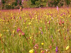 8331   summer meadow