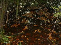 8570   swamp water