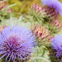 10950   Flowering blue thistles