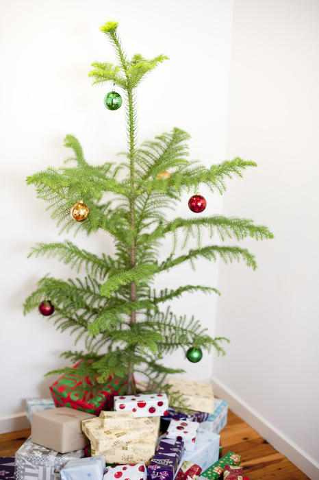 Small simply decorated pine Christmas tree and gifts standing in the corner of a room against white walls on a hardwood floor