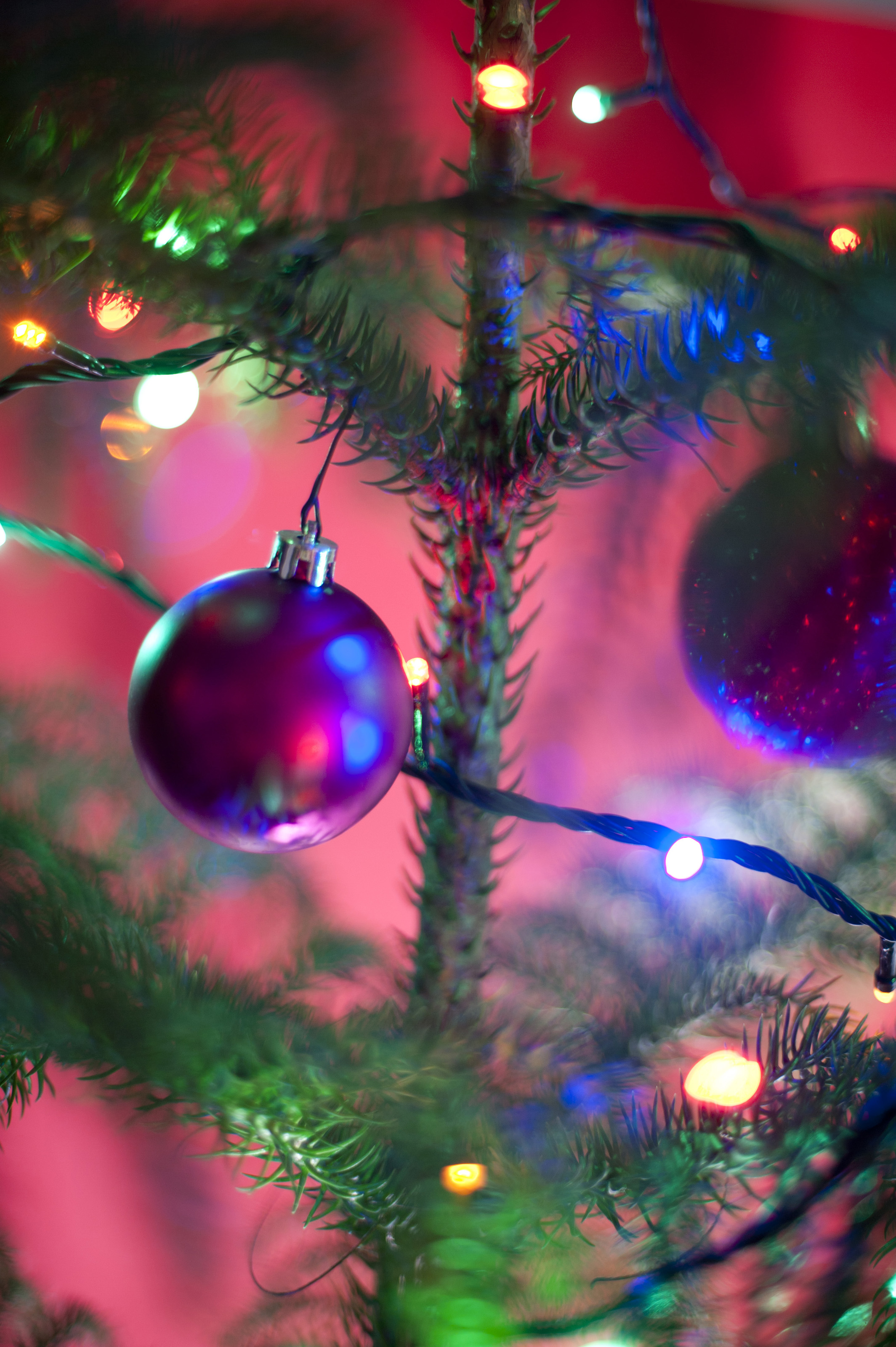 Purple Christmas Tree Baubles Uk : Free stock photo festive purple bauble on a natural