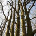 8725   Copse of deciduous trees