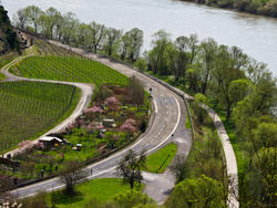 8260   Vineyards by the Mosel River