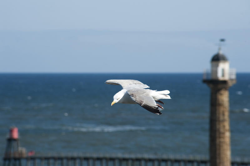 Seagull flying past a lighthouse on the Whitby pier with its wings outspread and an ocean backdrop