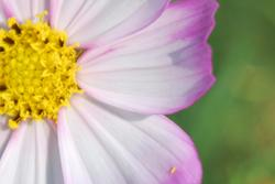 11281   wildflower2